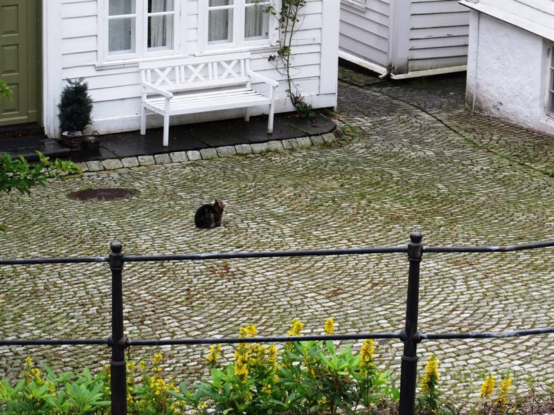 Katze in Norwegen